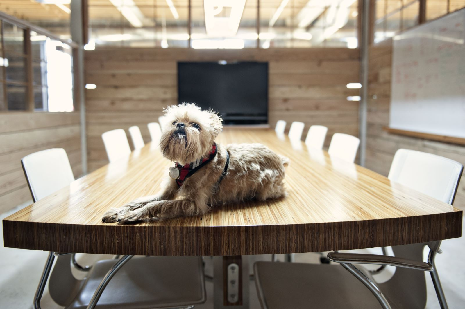 Lighter side: Are you ready for international 'Take Your Dog to Work Day'?