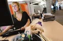 Office doggie?