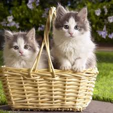 Far Out Friday: Uber launches kitten delivery for employees