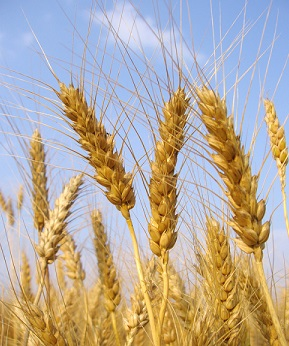 Industry could help tackle implications of global food security