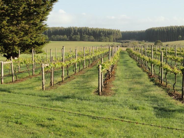 Suffoir vineyard