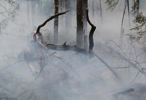Insurance can help Southeast Asia combat haze, say academics