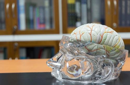How neuroscience can enhance school leadership