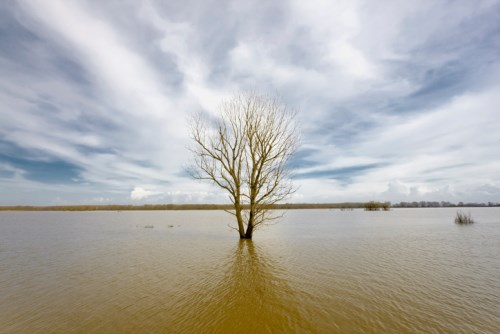 ICNZ chief on adapting to climate change