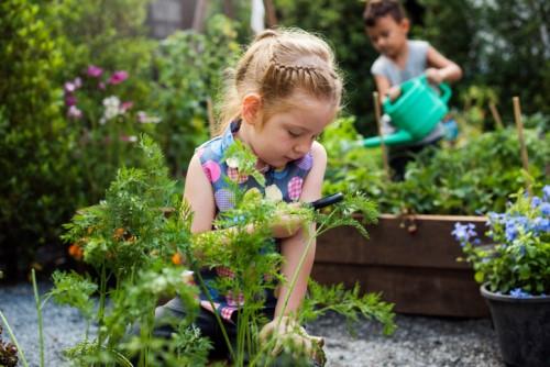 The benefits of having a school garden