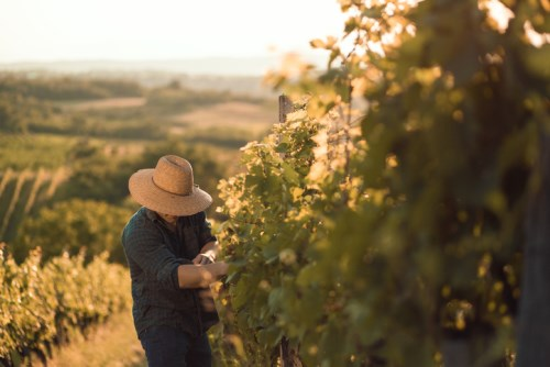 NZ wine industry set for high claims surge