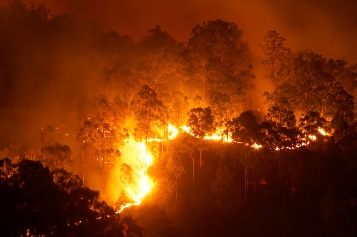 Bushfire to cost state power company $26mn
