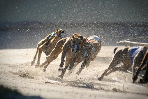 NSW greyhound racing ban U-turn confirmed