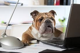 The pros and cons of office pets